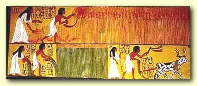 Harvest in Ancient Egypt